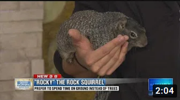 Wildlife World Zoo: Meet a Rock Squirrel